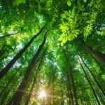 Ecosia, il motore di ricerca che pianta alberi