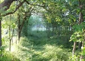 Il bosco conquista rapidamente i terreni abbandonati,