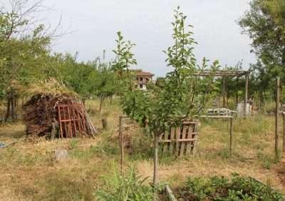 Panorama del Bosco di Ogigia, giugno 2017