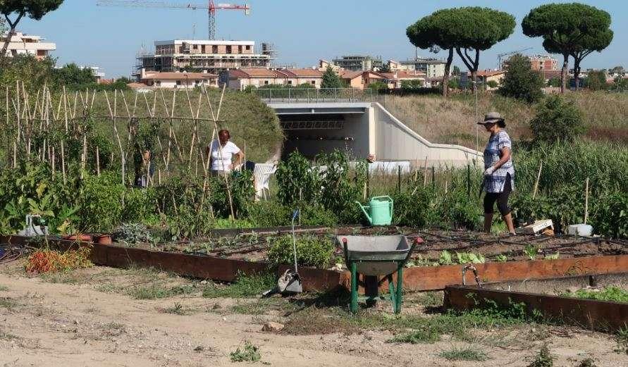 Scorcio degli orti urbani a Casal Brunori, Roma