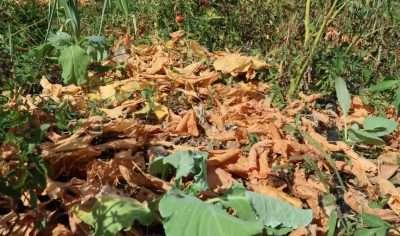 Orto d'autunno