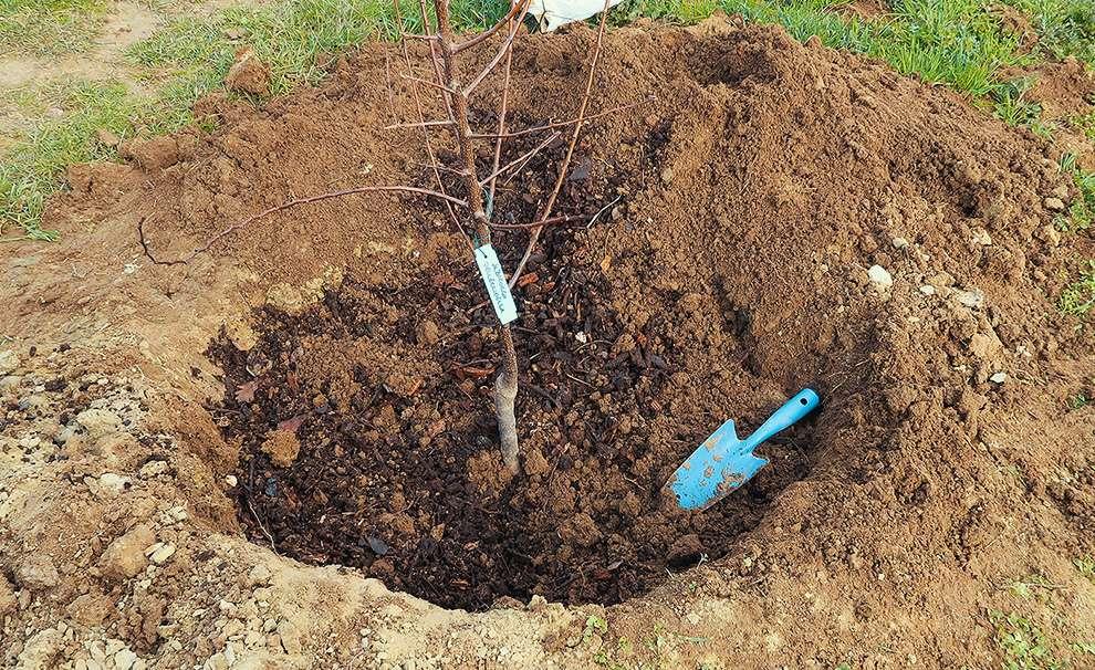 operazioni per piantare un albero
