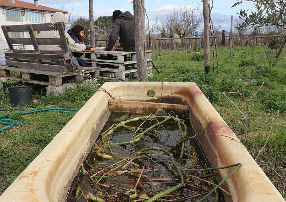 Le piante acquatiche prima di essere messe nello stagno