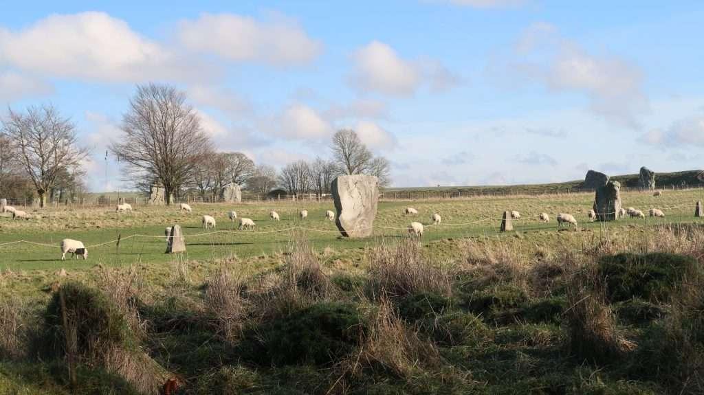 pecore ad Avebury, Inghilterra