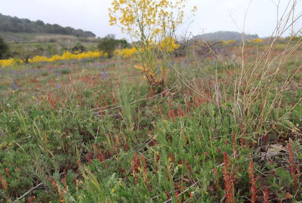 Le specie di erbe spontanee che crescono in un terreno indicano le sue caratteristiche