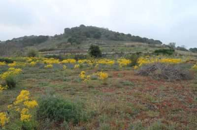 Panorama Azienda Etna Natura e Salute