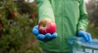 mele_pesticidi