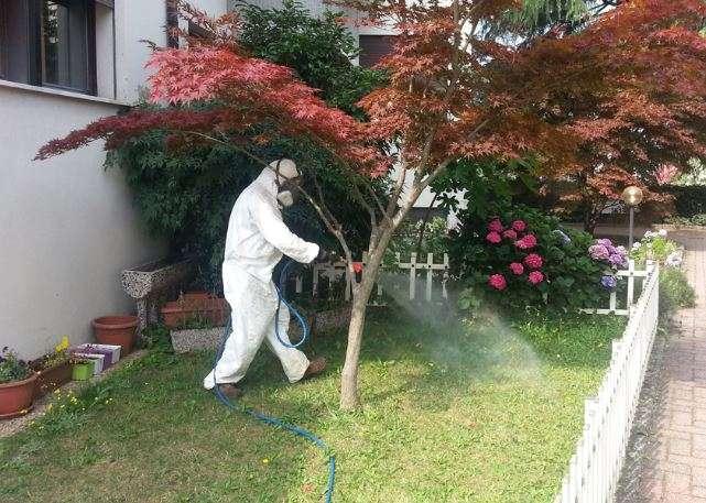 trattamento insetticida