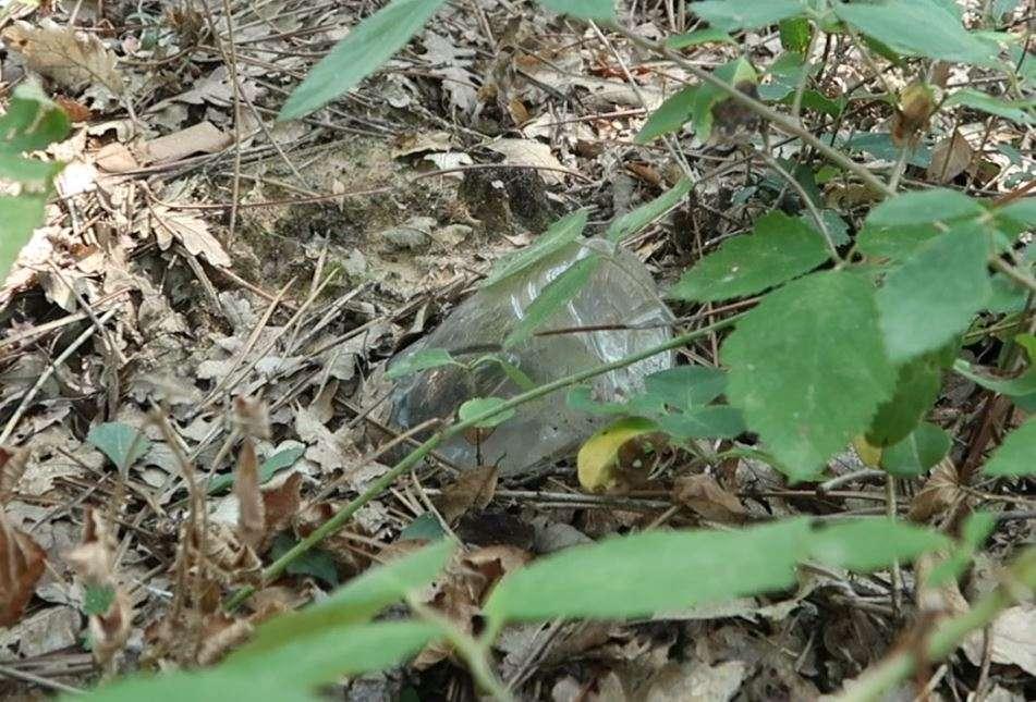 Una bottiglia di plastica abbandonata nel bosco