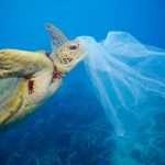 L'anno in cui il mondo disse NO alla plastica