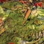 Per salvare il pianeta smettiamo di gettare cibo