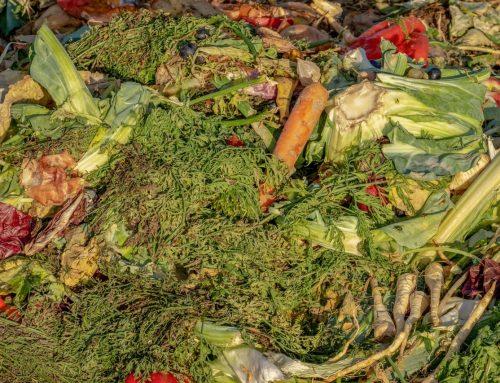 Per salvare il pianeta smettiamo di gettare cibo Consigli pratici per ridurre gli sprechi alimentari