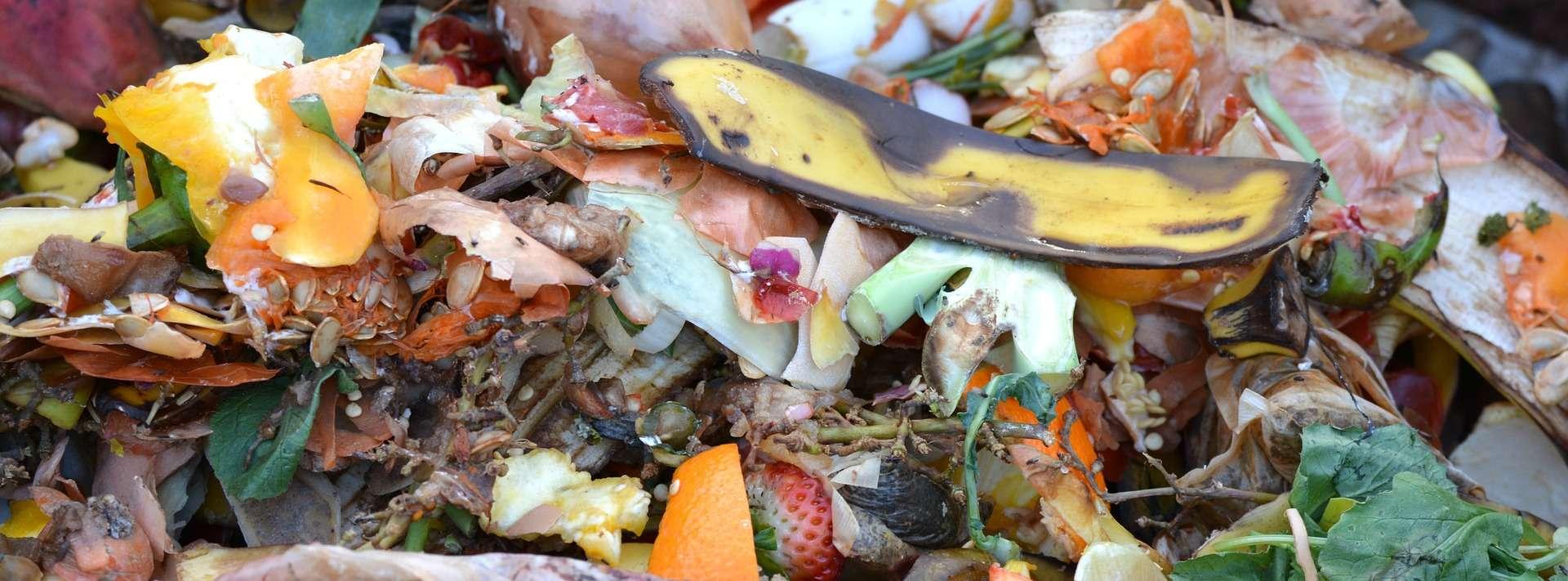 Con i rifiuti organici si può preparare compost per le nostre piante