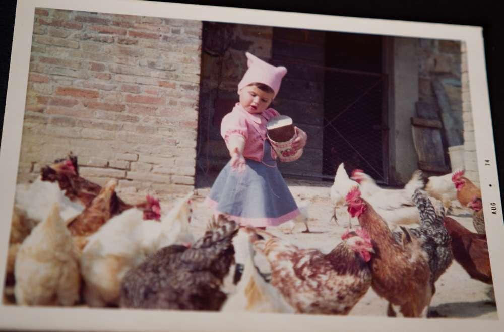 Le galline razzolavano sull'aia