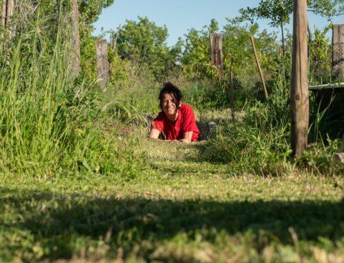 Dodici consigli per l'orto senza fatica Produrre cibo con l'aiuto della permacultura