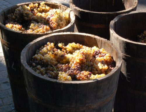 Come si faceva il vino, gli attrezzi in cantina Coltivazione della vite in Valdichiana negli anni '40-'50