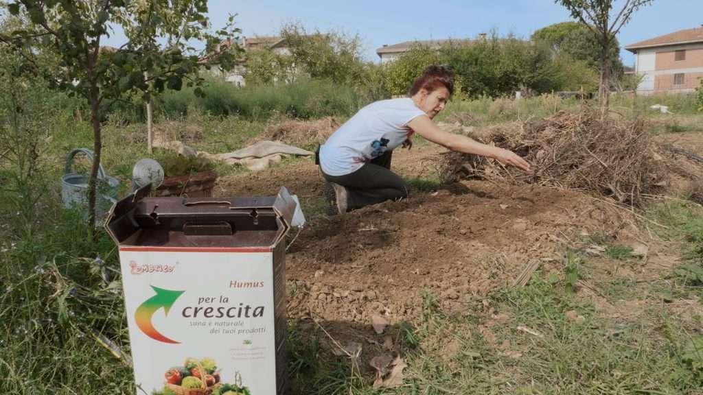 Aggiungere humus al momento del trapianto aiuta la crescita della piantine