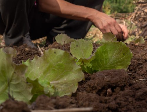 Humus di lombrico, il miglior fertilizzante che c'è Nutre le piante e contrasta il cambiamento climatico