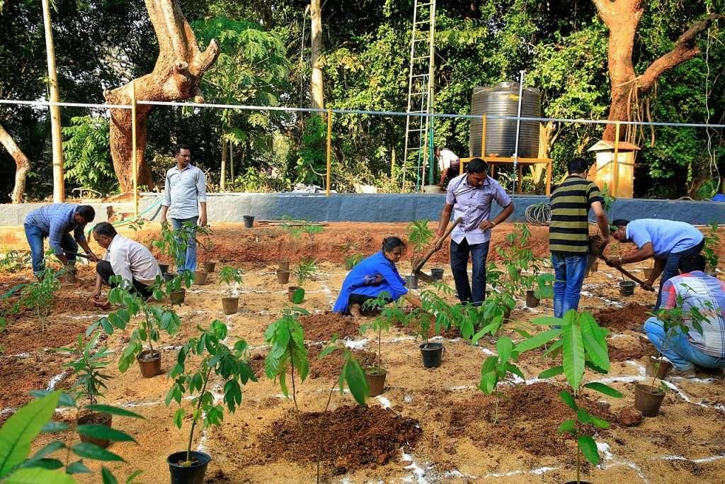 Piantando una foresta Miyawak