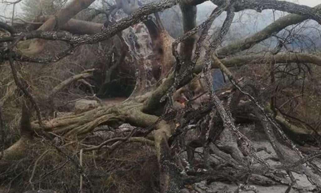 albero secolare bruciato in Sardegna