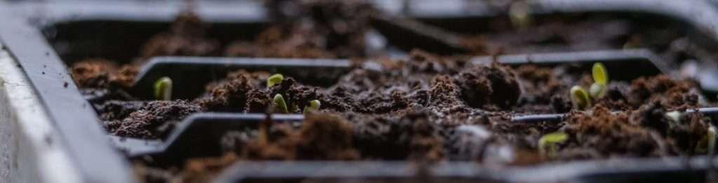 Semenzaio con compost
