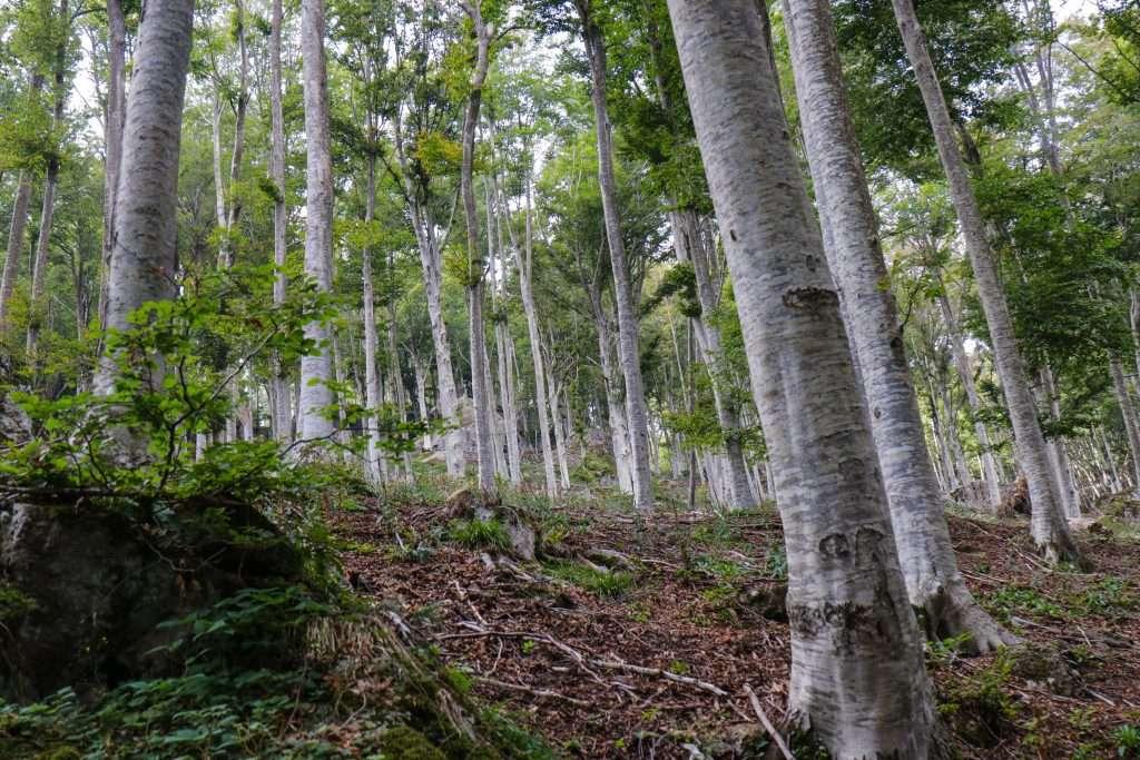 Bosco sul monte Amiata
